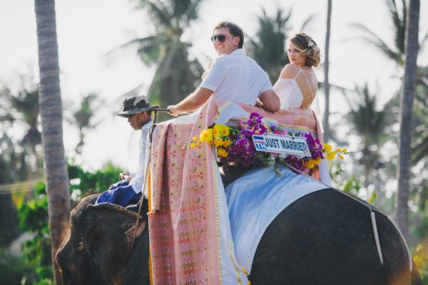 слон на свадьбе